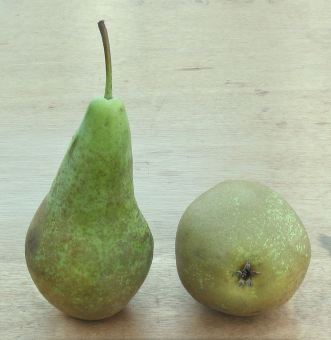 conference-pears